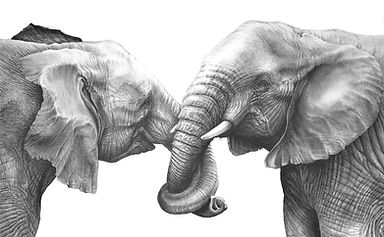 Elephants holding each other's trunk drawing by Gary Hodges