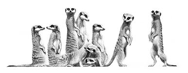 Meerkats drawing by Gary Hodges