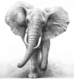 The Charge 1997 (African elephant)