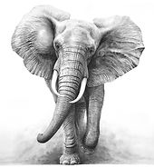 Charging elephant drawing by Gary Hodges