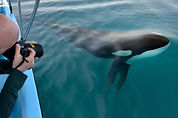 Photographing wild orca, killer whale, off the Pacific coast of Costa Rica