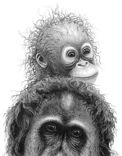 Plea for the Rainforest 1999