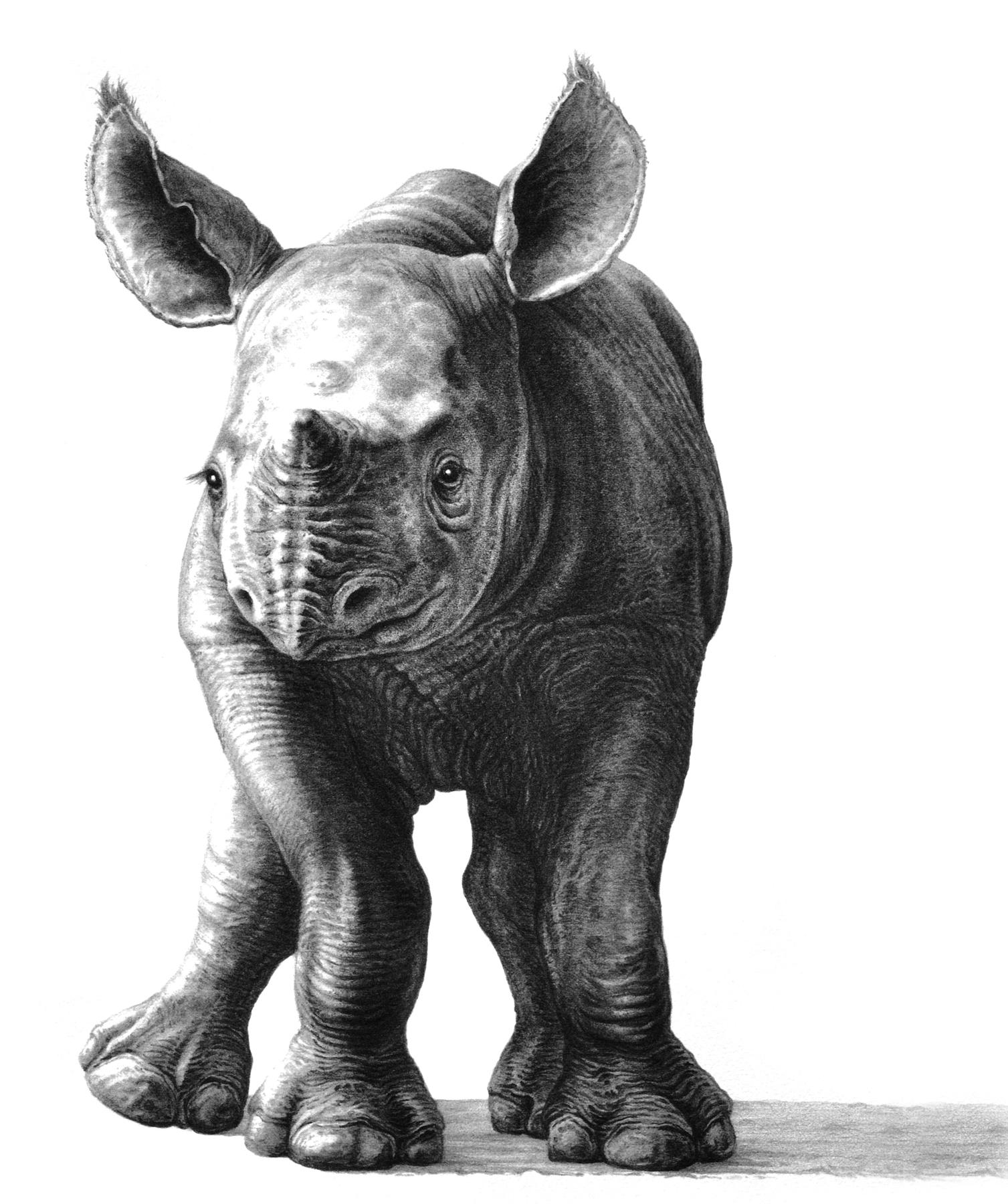 Wobbly 2000 (rhino)