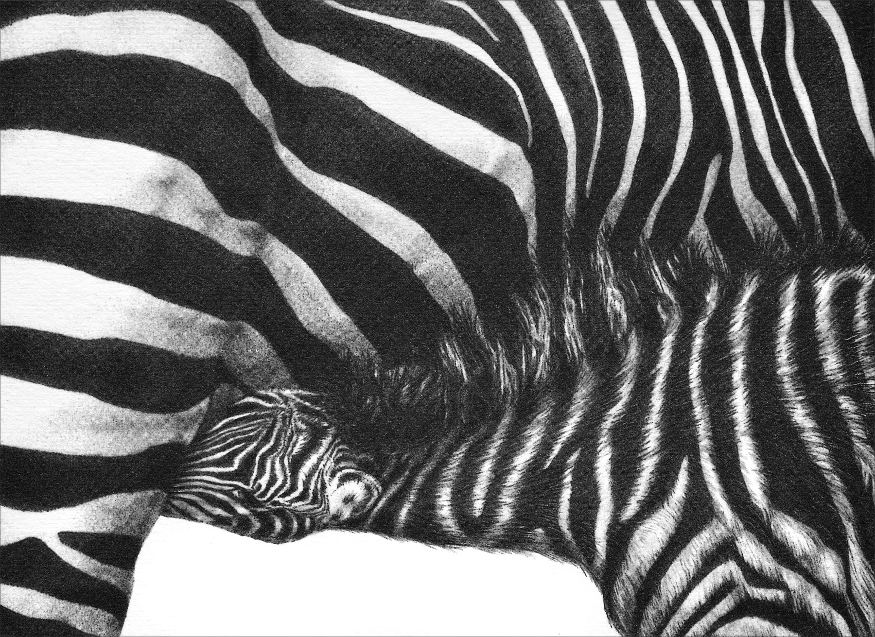 Tender Moment 1999 (zebra)