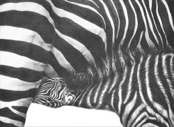 Tender Moment 1999 (zebra)