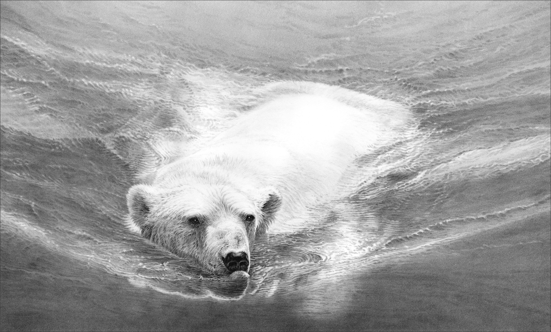 Swimming polar bear 1994