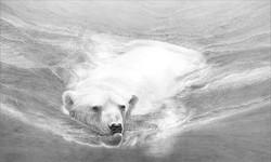 Swimming polar bear 1994