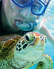 Swimming  with turtle, Australia