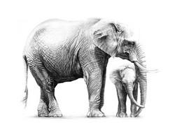 Elephants africaines 1989