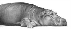 Hippo 1990