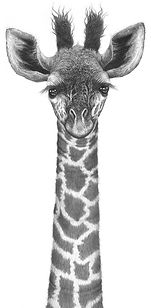 Giraffe drawing by Gary Hodges