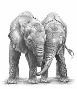 The Orphans 1991 (African elephants)