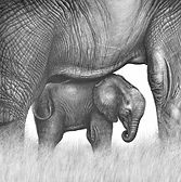 African elephant and calf drawing by Gary Hodges