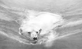 Polar bear swimming drawing by Gary Hodges
