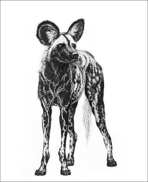 Painted wolf original_web.jpg