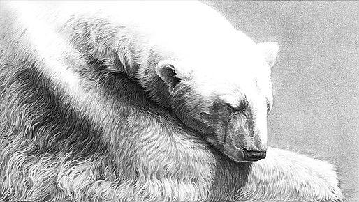 The Snow Bear 2019_web.jpg