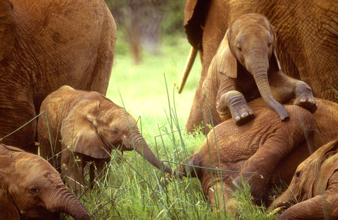 IVORY TRADE: A LETHAL EXPERIMENT
