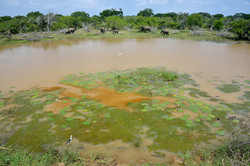 Waterhole with elephants