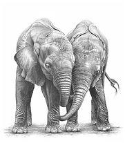 orphaned elephants by Gary Hodges