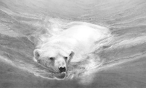 Swimming polar bear_web.jpg