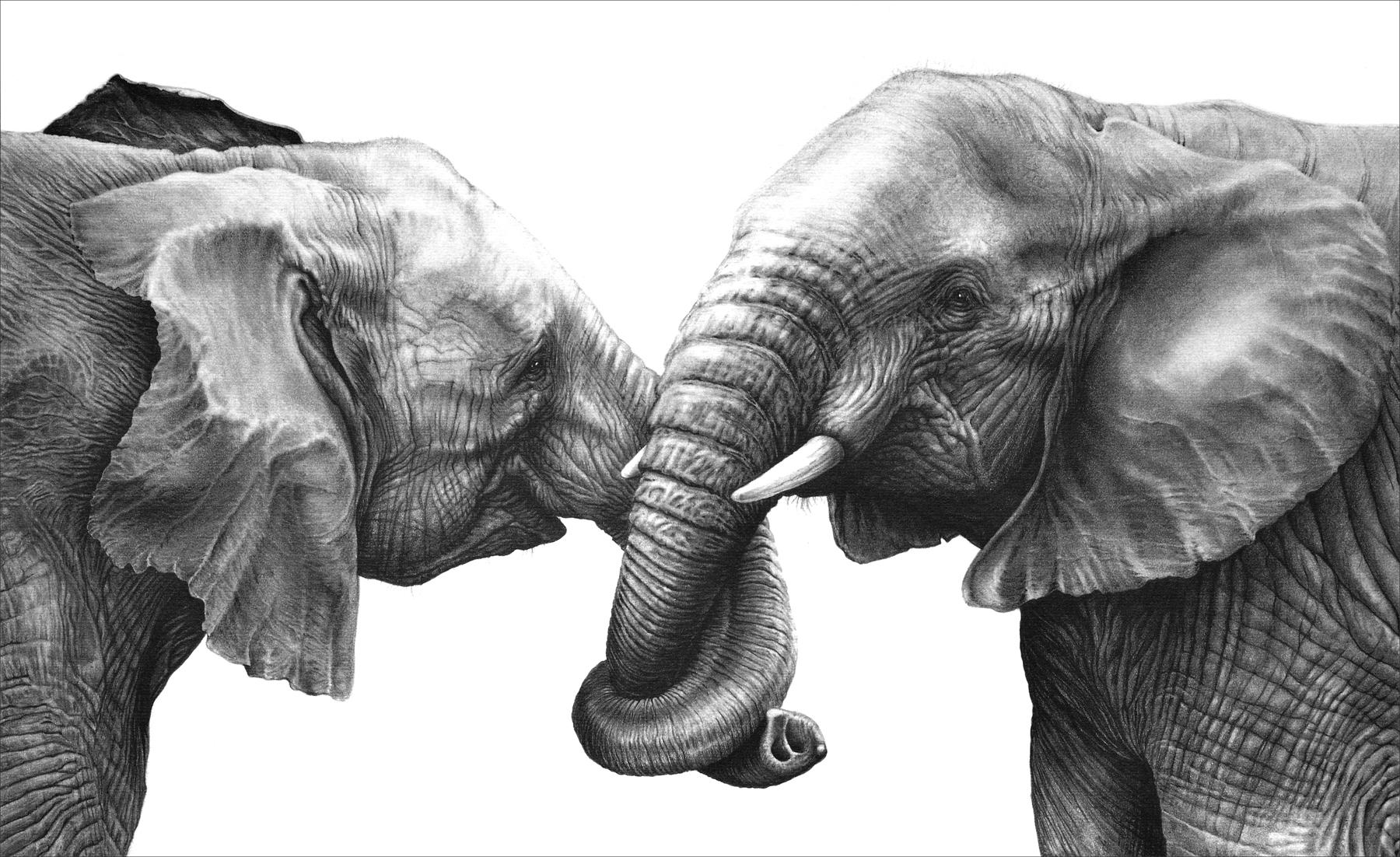 Friends 1995 (African elephants)