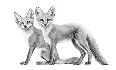 Young red foxes drawing by Gary Hodges