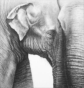Asian Elephants Kick_web.jpg