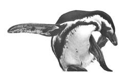 High Kickin 2001 (penguins)