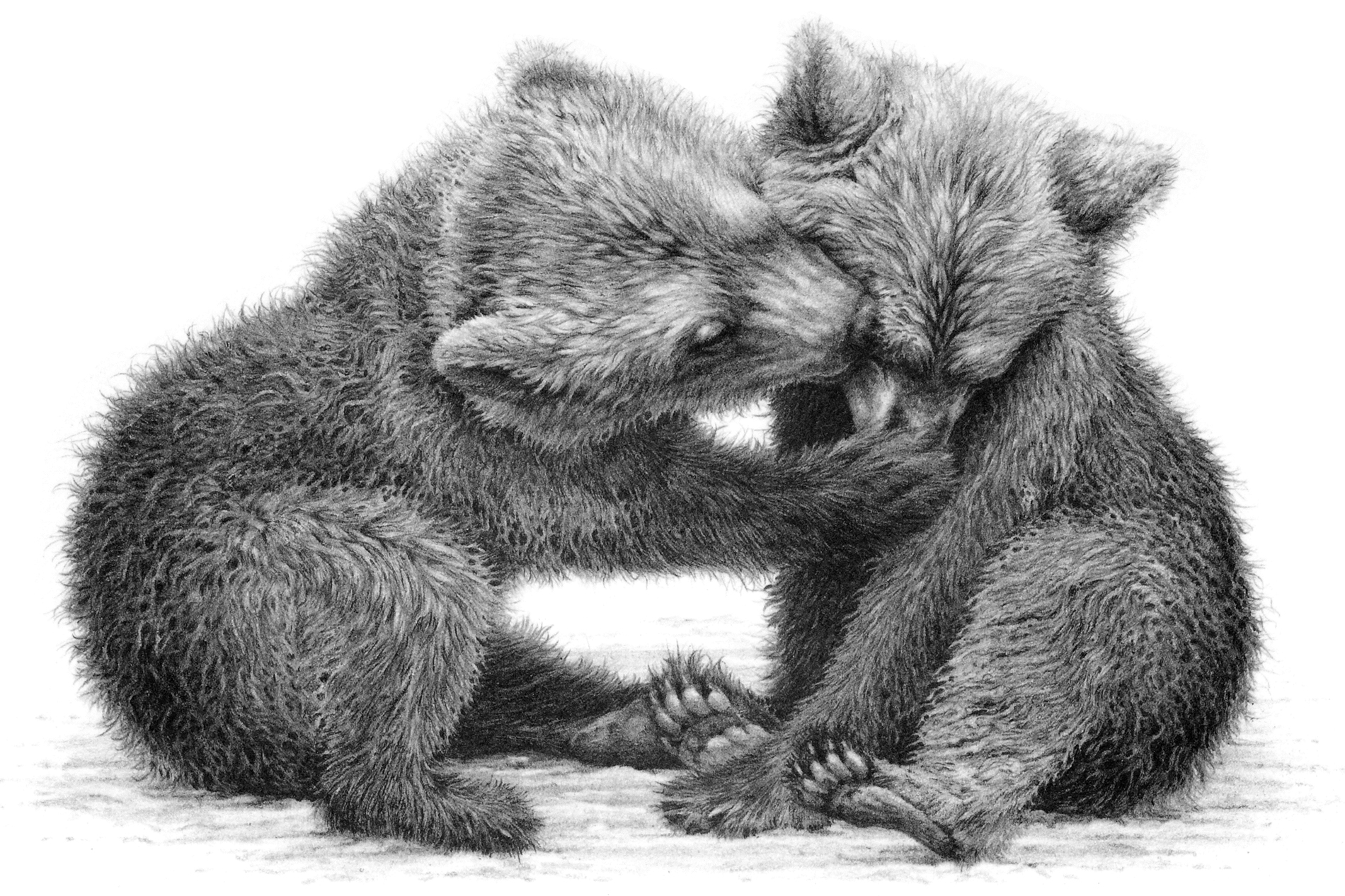 Brown bear cubs 1991