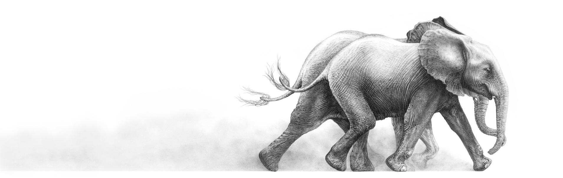 Joy 2003 (African elephants)