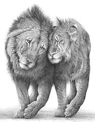 Two lions drawing by Gary Hodges