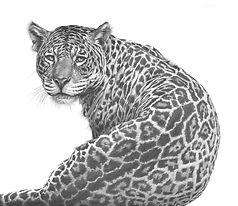 Jaguar by Gary Hodges