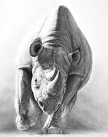 Rhinoceros drawing by Gary Hodges