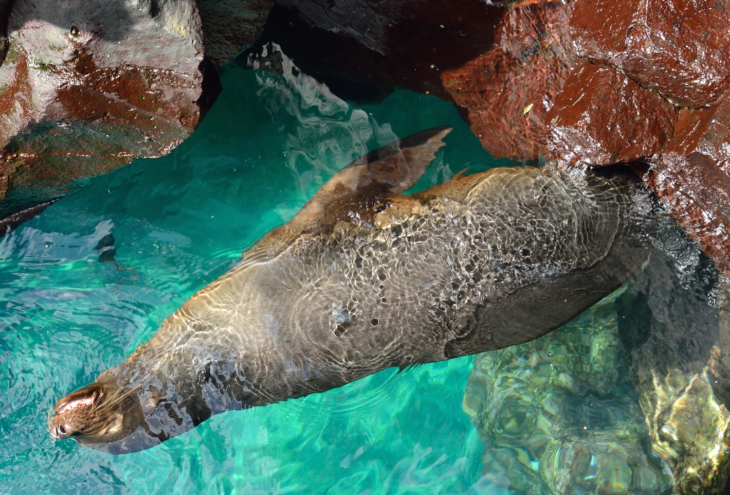 Sealion in rocks by Dave Currey