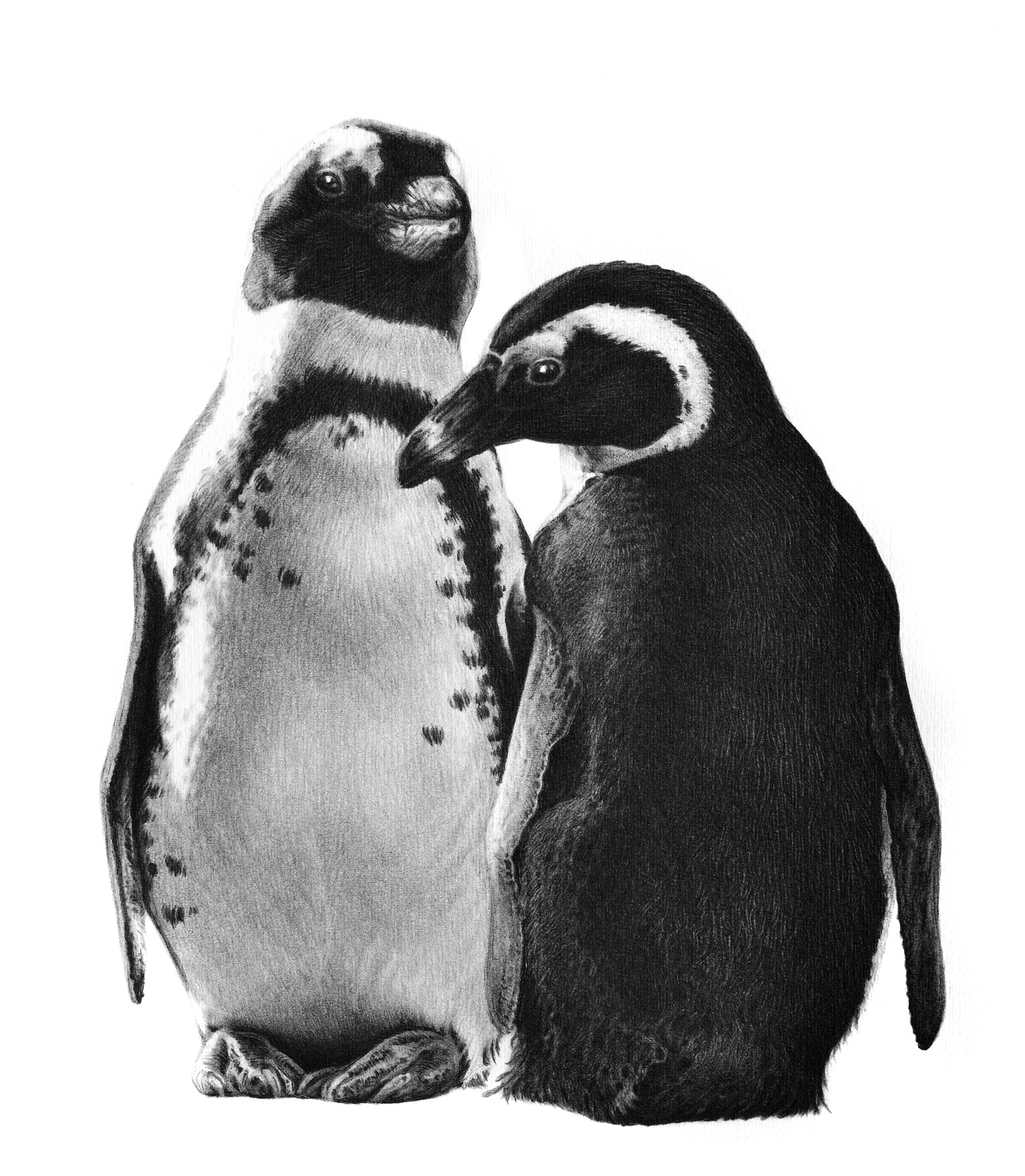 Just the two of us 2002 (penguins)