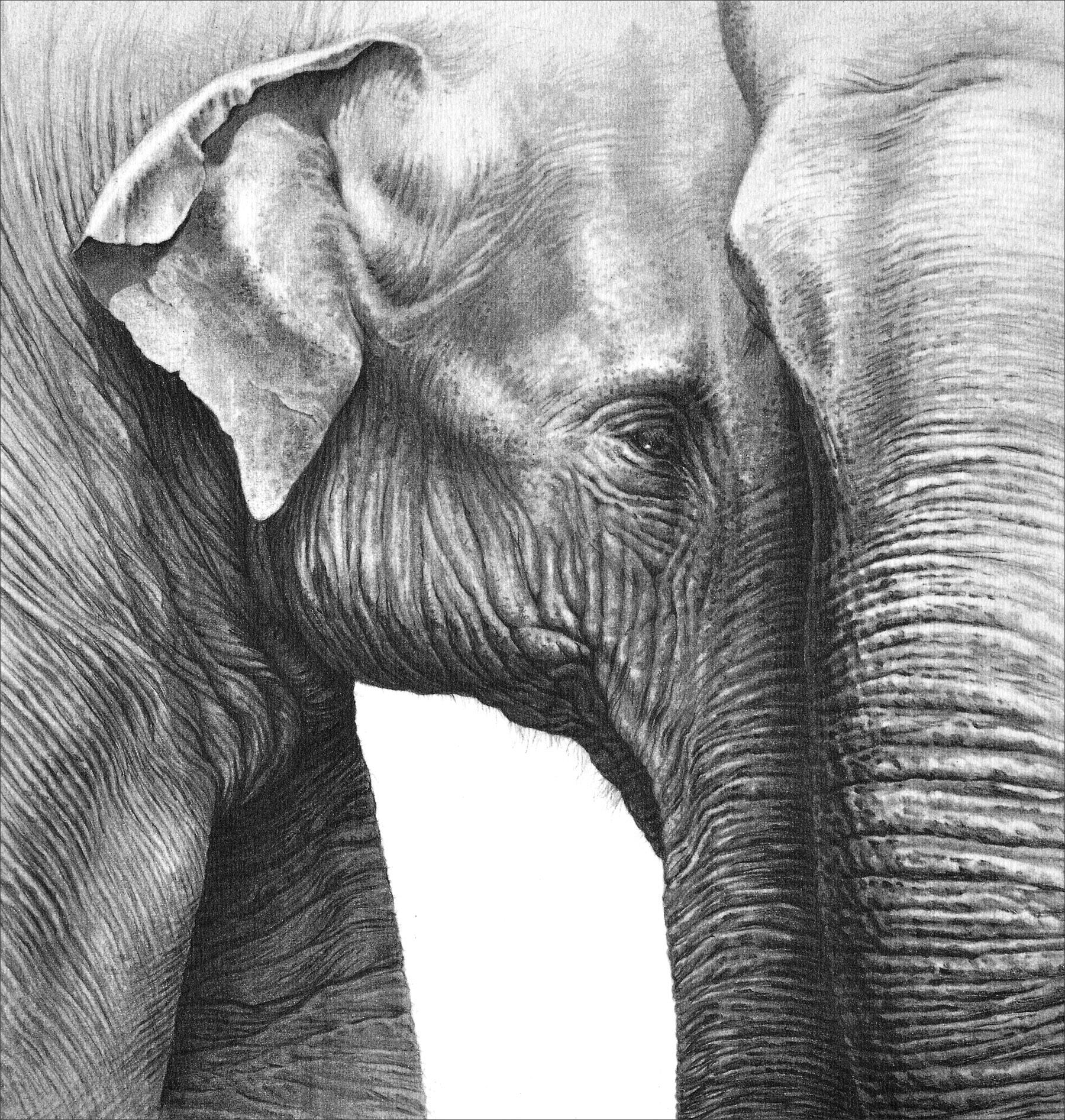 керчи слоники рисунок карандашом ещё сегодня