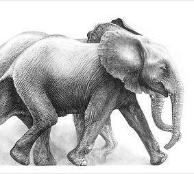 Elephant drawing link to Gary Hodges video