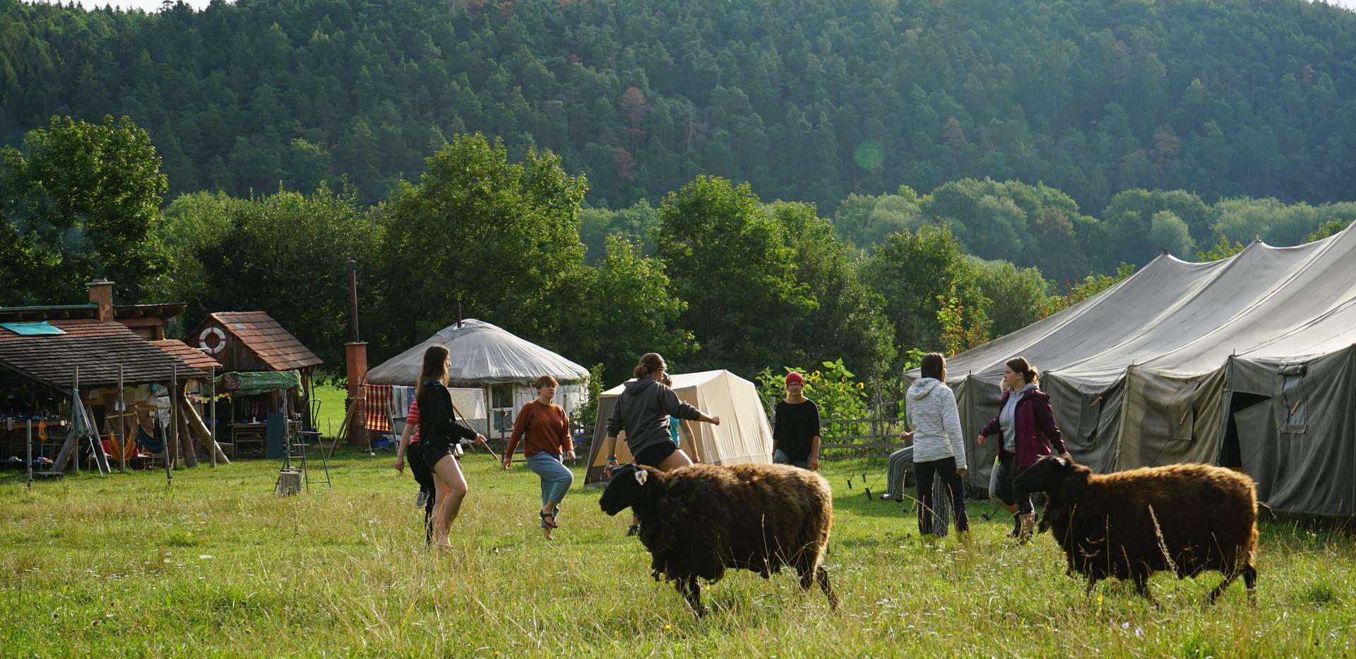 Morgentraining und Schafe