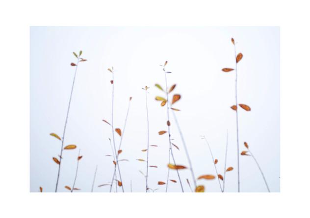 Autumn sallow 2.jpg
