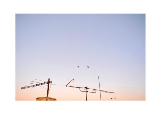 Sunrise birds.jpg