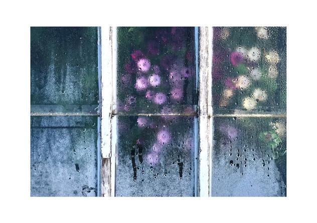 Flowers behind glass.jpg