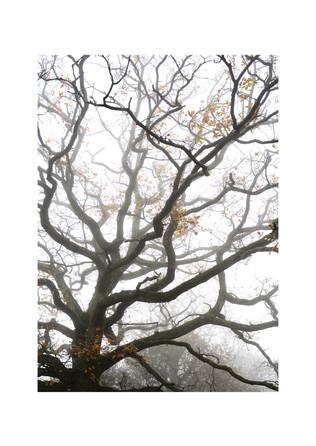 branches in mist.jpg