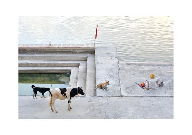 animal crowd.jpg