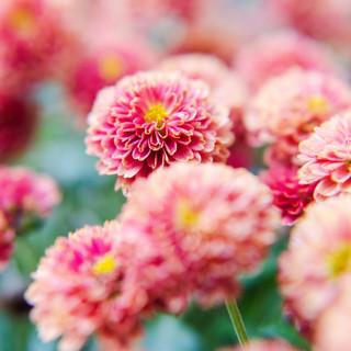 The Flower Dance I