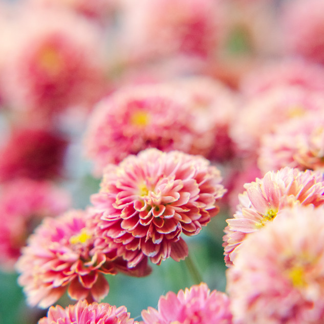 The Flower Dance III