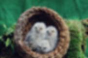 Baby birds __