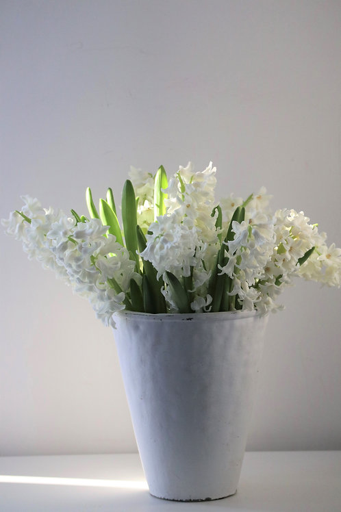 Hyacinth bouquet in white vase