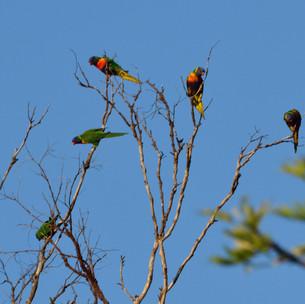 Birds chattering