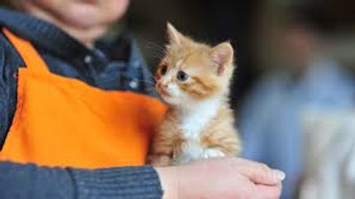 shelter volunteer with orange kitten