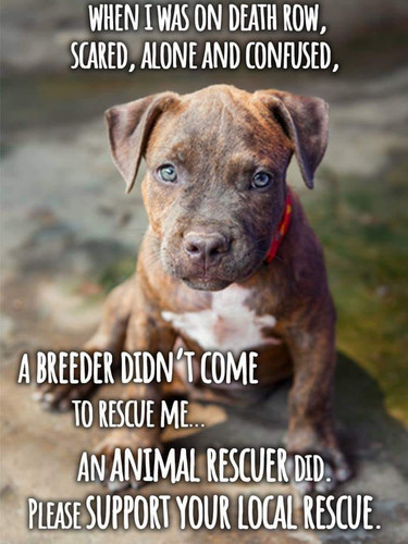 support rescue